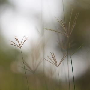 grass stalks