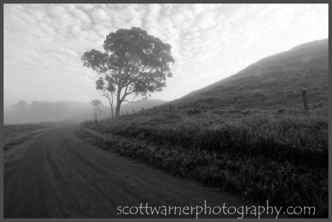 Misty Morning in the Scenic Rim