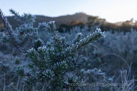 A cold frosty morning in Girraween National Park