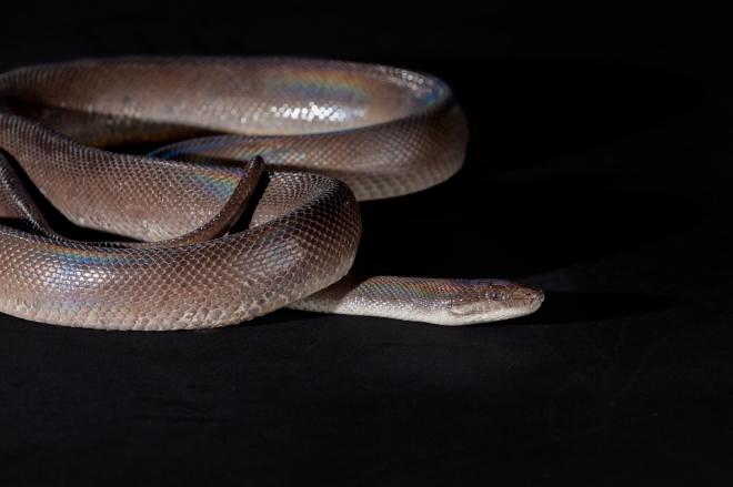 Toby the snake guy